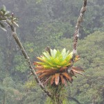 Bromeliads - Cool plants I reckon